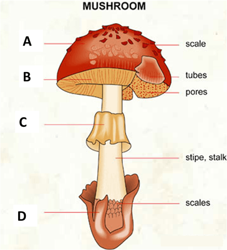 Identify the parts in Mushroom
