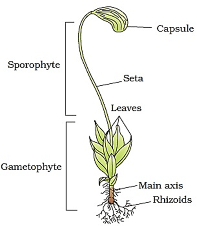 Image of the plant