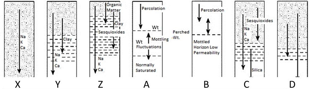 Identify the various soil processes given in the diagram