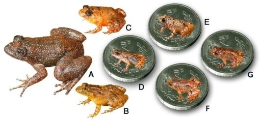 Seven new species discovered from the Western Ghats