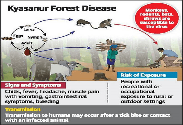 This is image show in Kayasanur Forest Disease