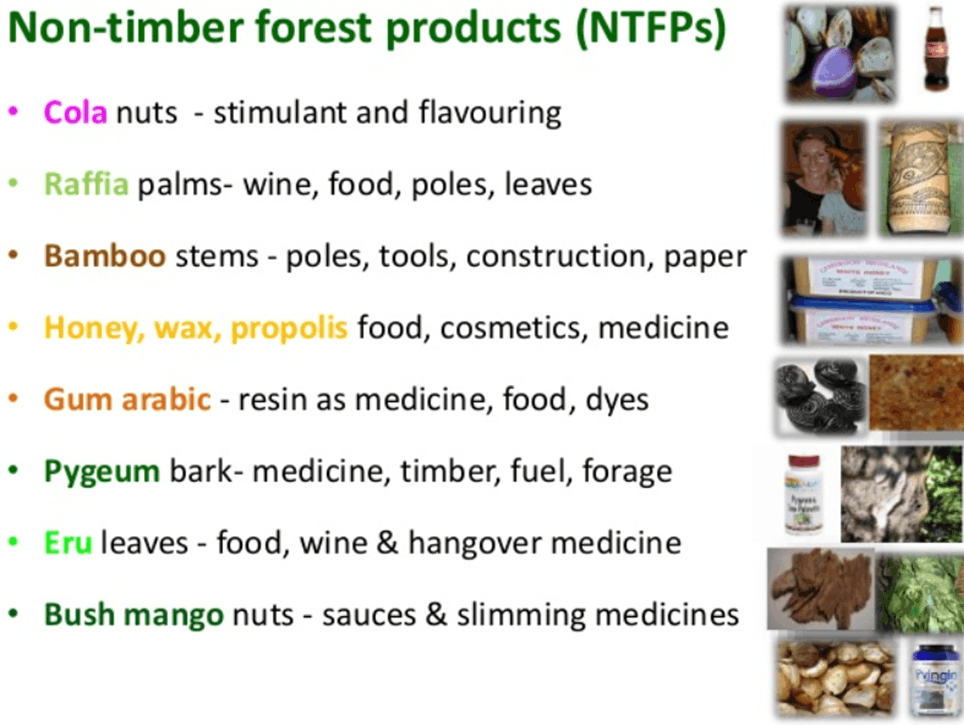 Image of Non-Timber Forest Products
