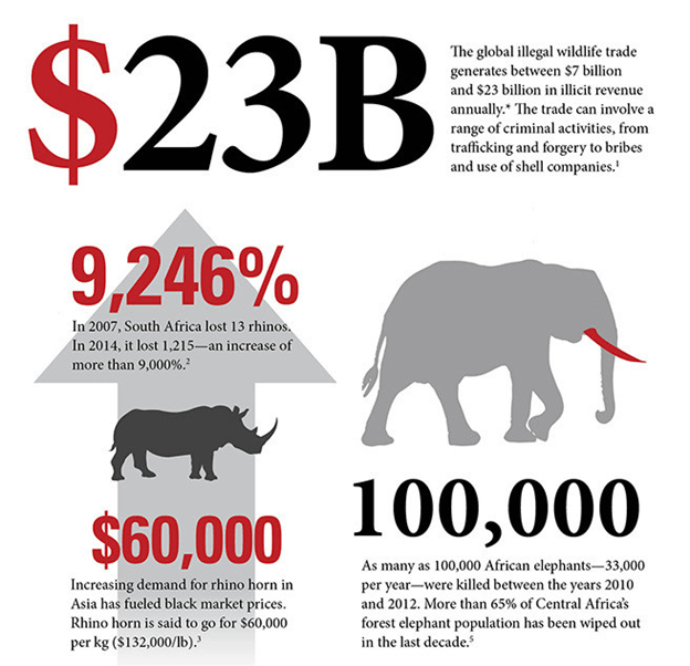 Image of Illegal Wildlife Trade Data India