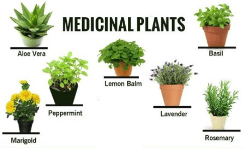 Image of Medicinal Plants