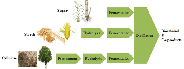 Image of Bioethanol And Co-products