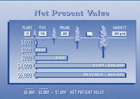 Net present value (NPV) of forest