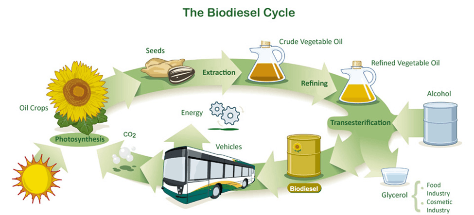 Image of Biodiesel Cycle