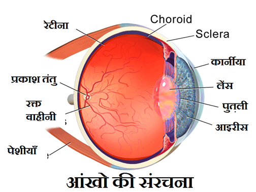 Image of Human Eye