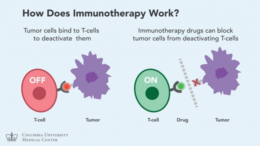 Image of Immunotherapy work