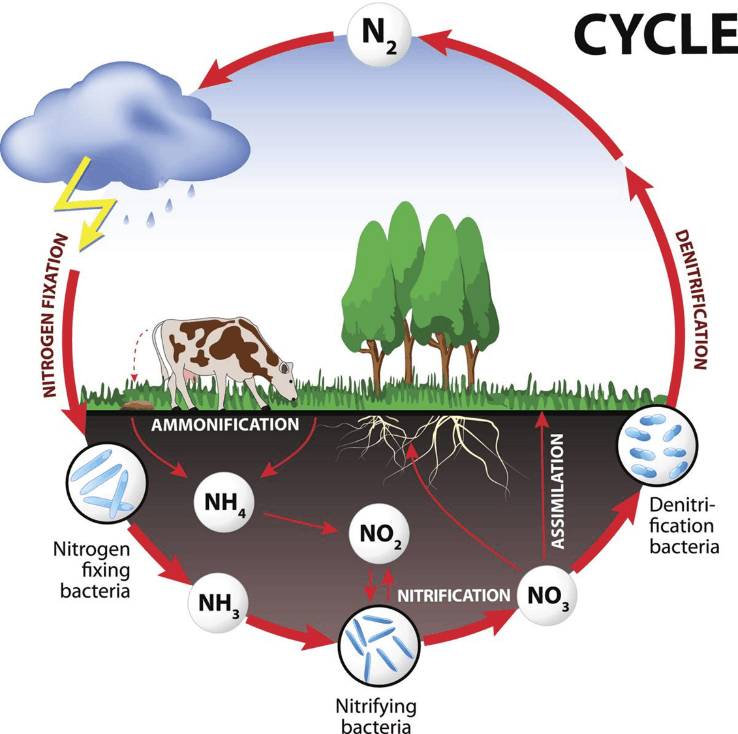 Image of a Nitrogen Cycle