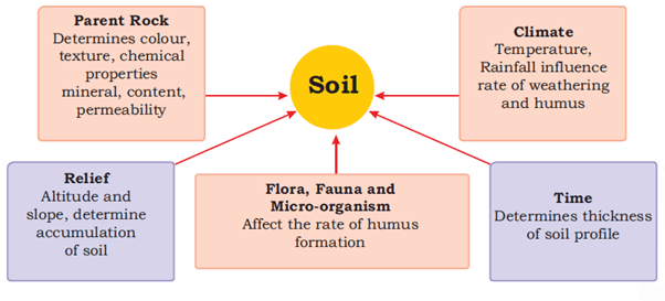 image of soil formation process