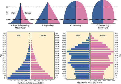 Image of Population/Age - Sex Pyramid