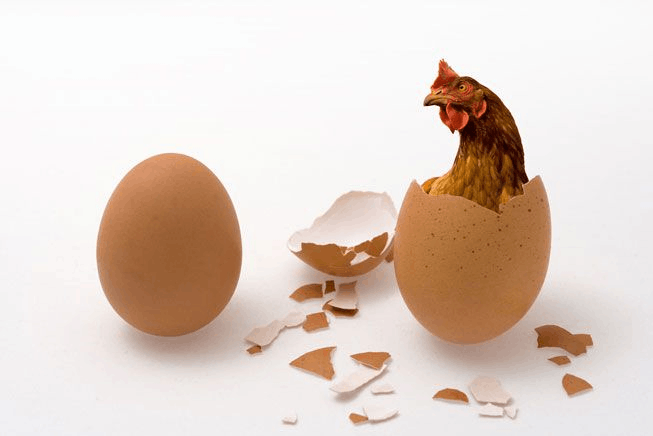 Image of Which came first – The Egg or The Chicken