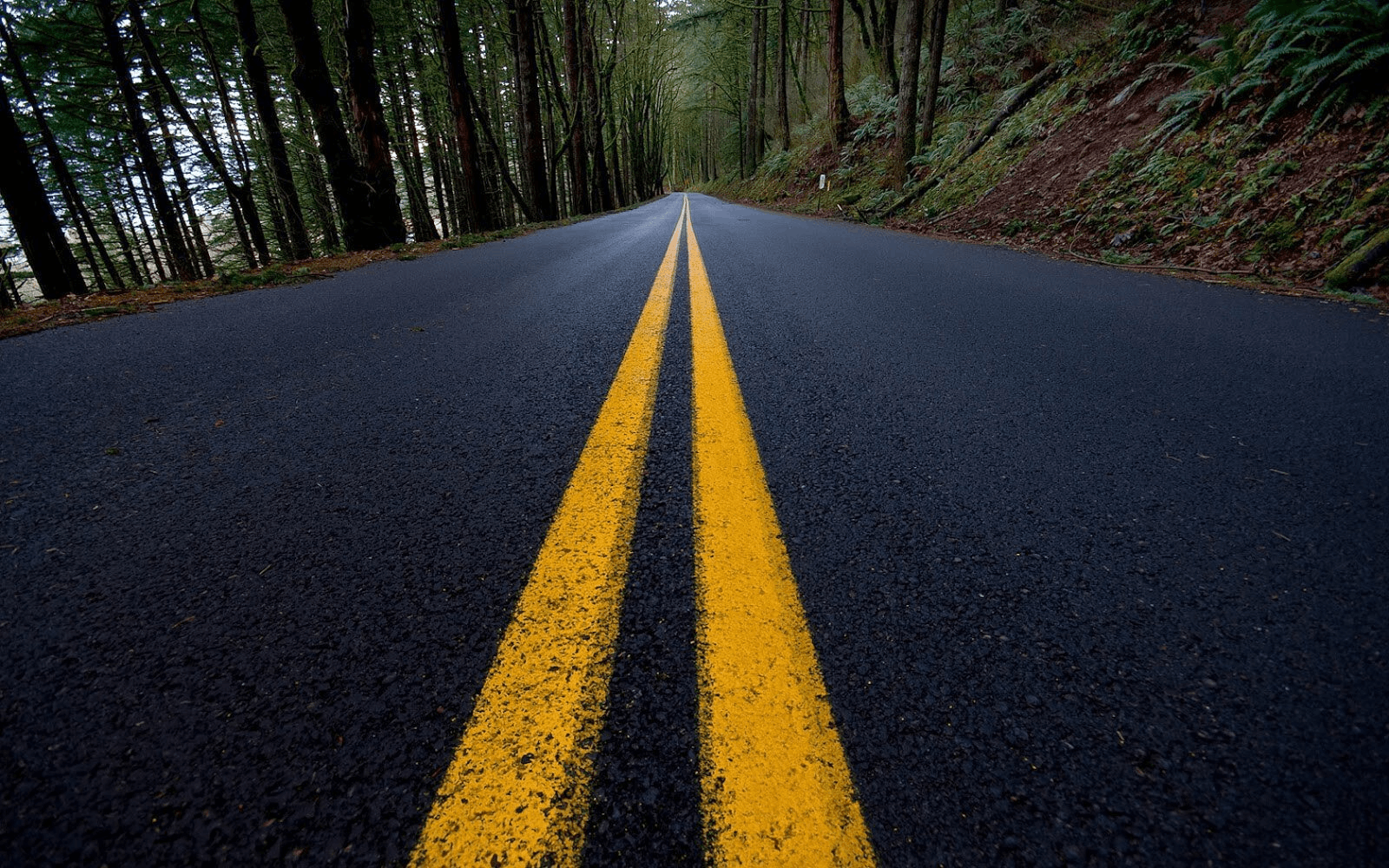 Image of double solid yellow line on road