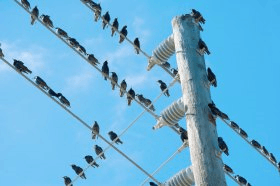 Image of Why don't birds on a wire get a shock