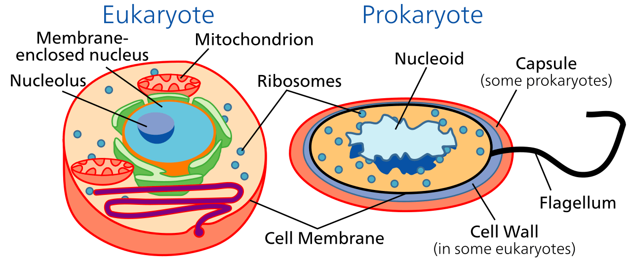 Structure of Cell For Cell Introduction of Image -1