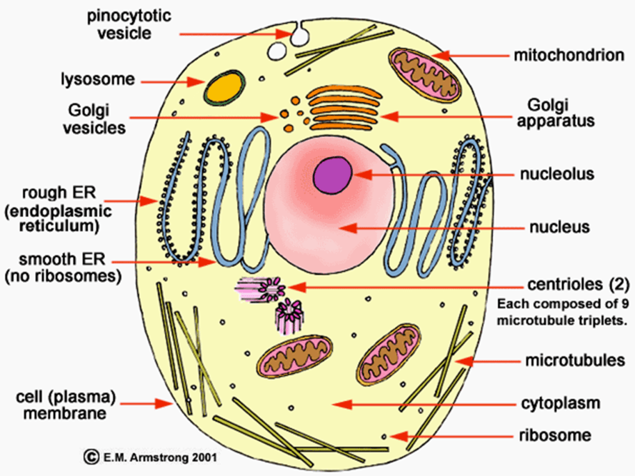 Structure of cell Image-1