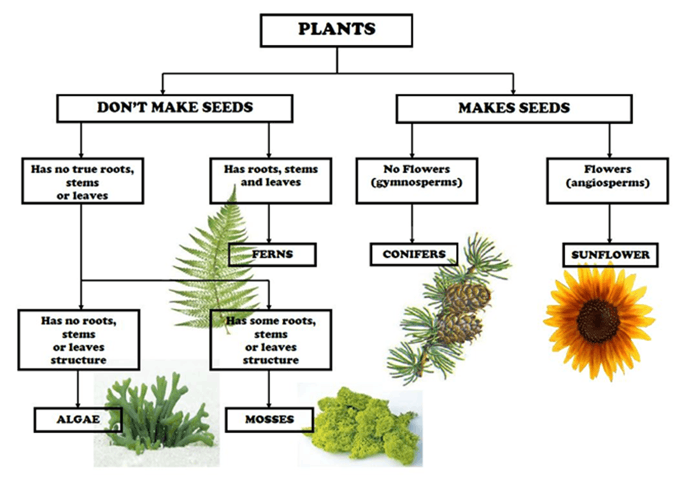 Image of Plants