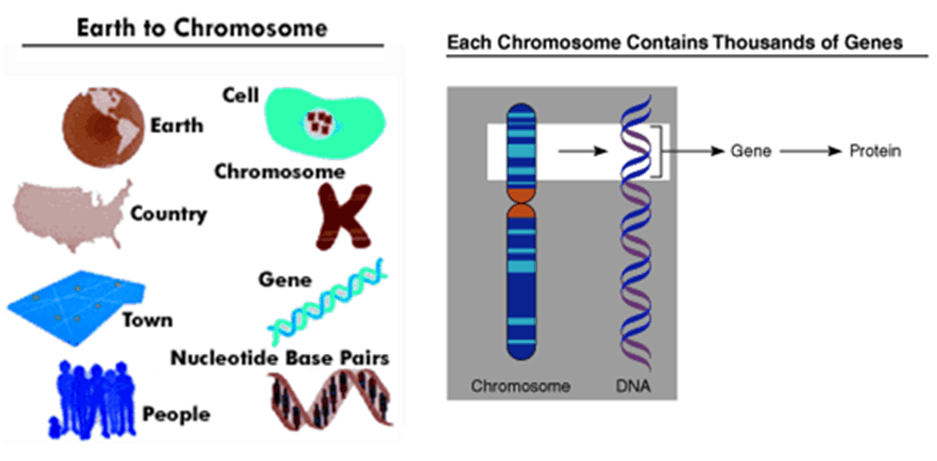 Image of Earth to Chromosome and Thousands of Genes
