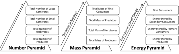 Number, Mass and Energy Pyramid Image