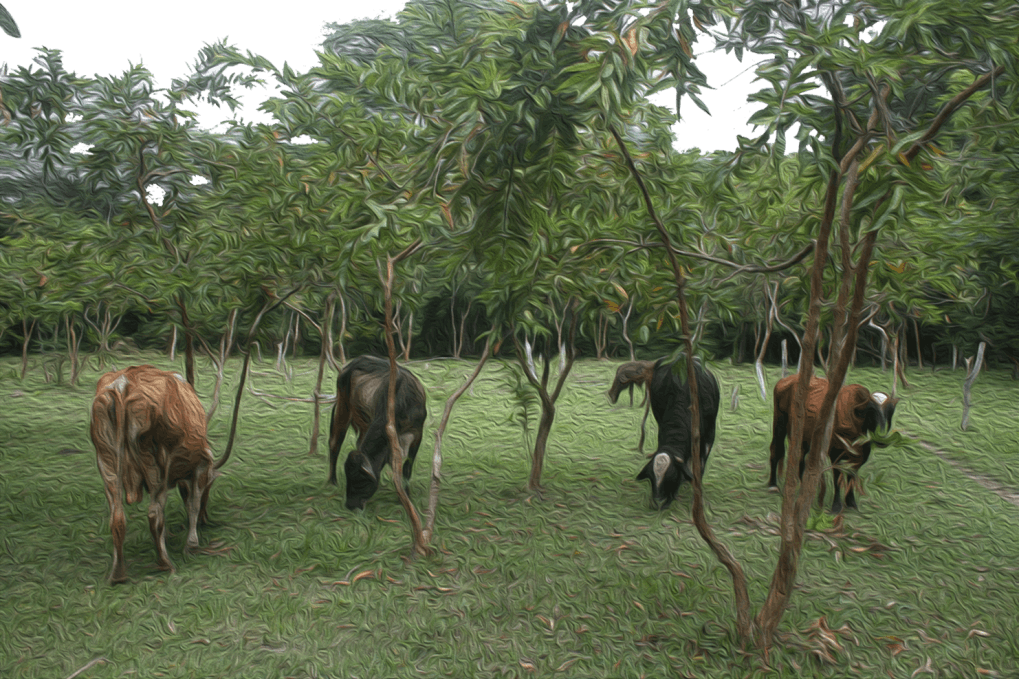 Agroforestry Image-3