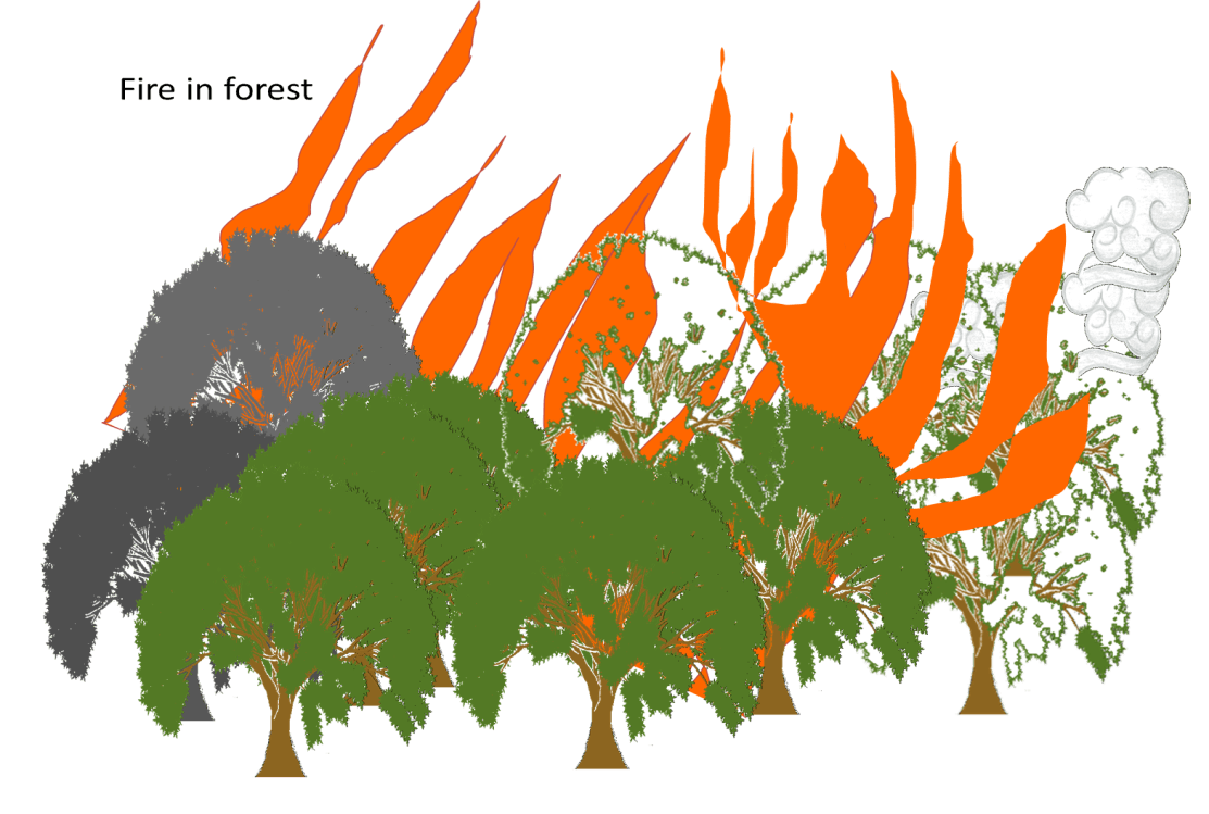 Fire in forest Image-1