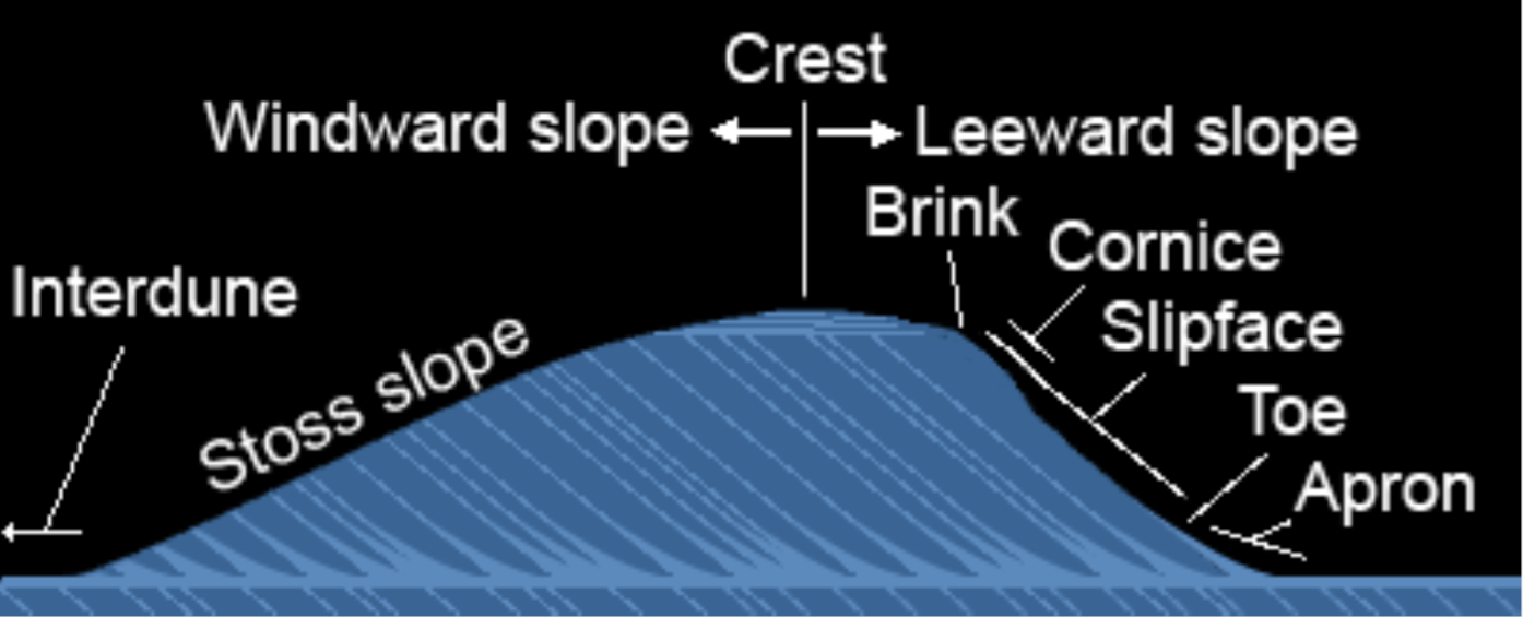 Cross section of sand dunes with faces and beds