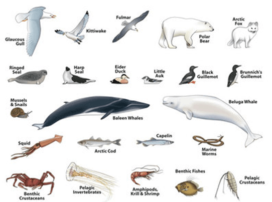 Image of Animals Polar Climate