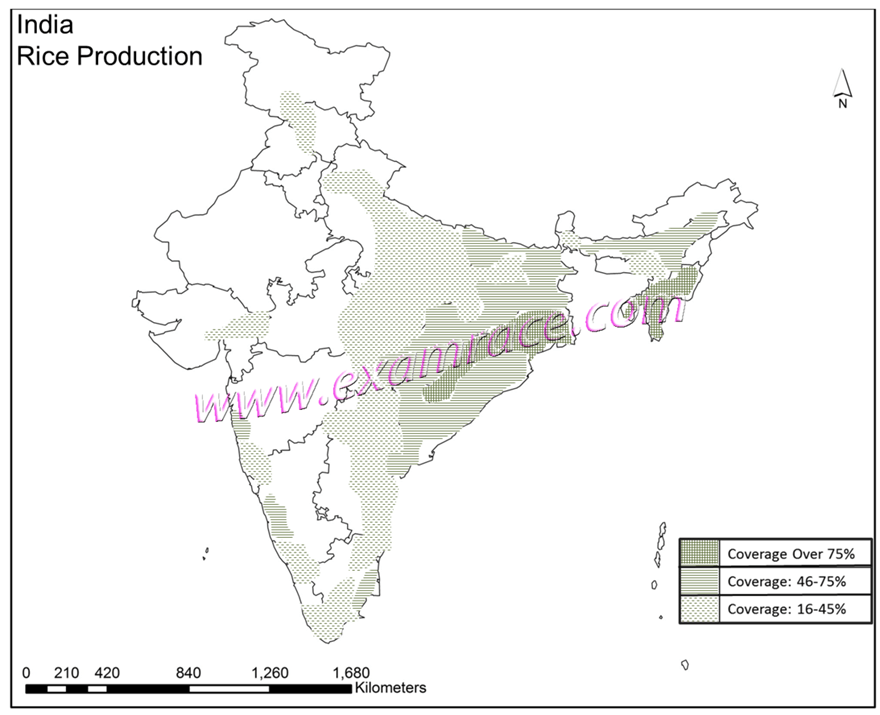 India Rice Production Map