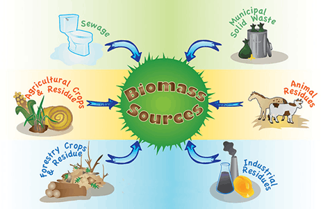 Image of Biomass Energy Sources