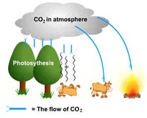Image of a Carbon Cycle
