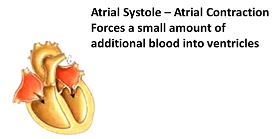 Image of Atrial Systole