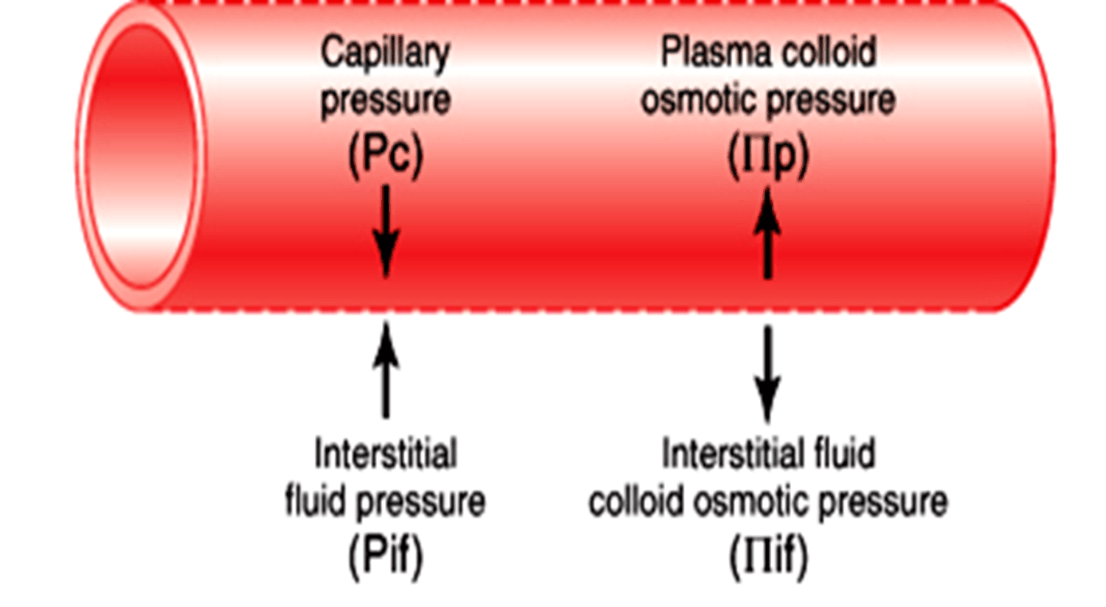Image of Capillary Pressure And Plasma Colloid Osmotic Press …