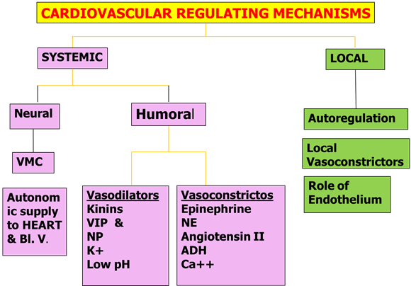 Image of Cardiovascular Regulating Mechanisms