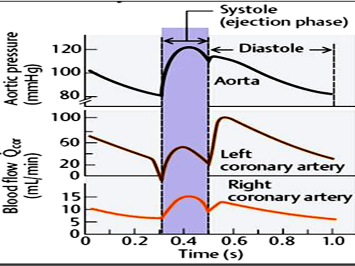 Image of Systole (Ejection Phase)