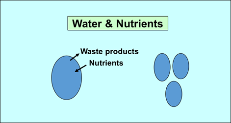 Image of Water And Nutrients For Simple Cell