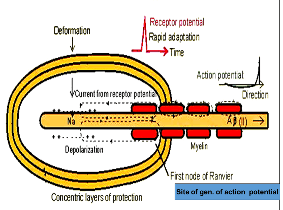 Image of Concentric Layers of Protection