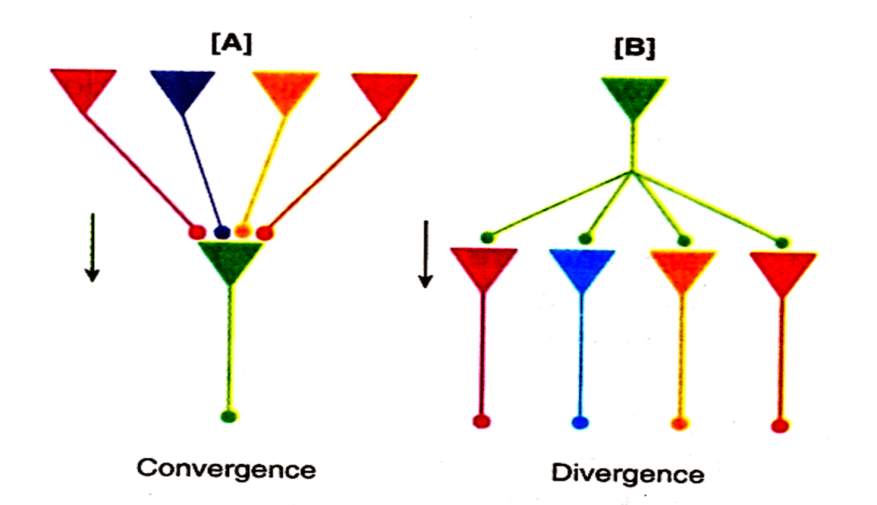 Image of Convergence and Divergence