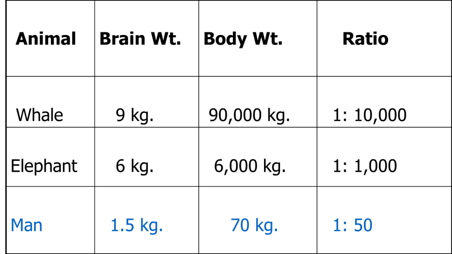 Table of Brain Body Weight Ratio