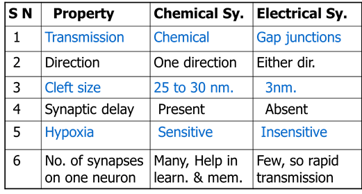 Table of Chemical And Electrical Synapse