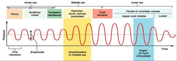 Image of Process of Hearing Sound