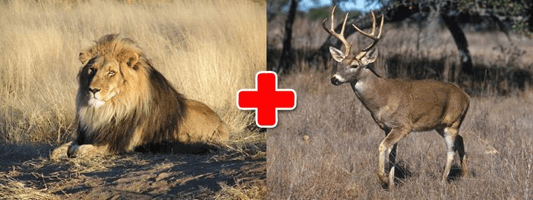Image of lion and deer