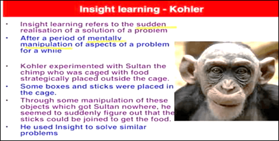 Insight learning Kohler