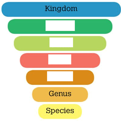 Diagram of Taxonomic classification
