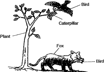 Figure shows a forest ecosystem