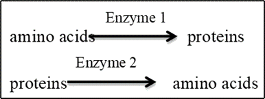 Deduction can be made about Enzymes