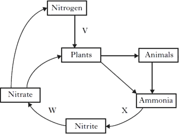 Wiring Diagram For 1963 Pontiac on 1965 mustang wiring harness