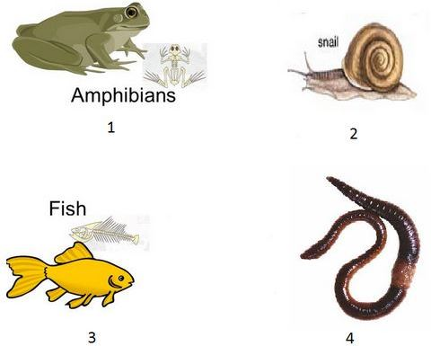 Select which one of following are vertebrates