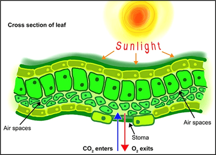The Structure of Sunlight