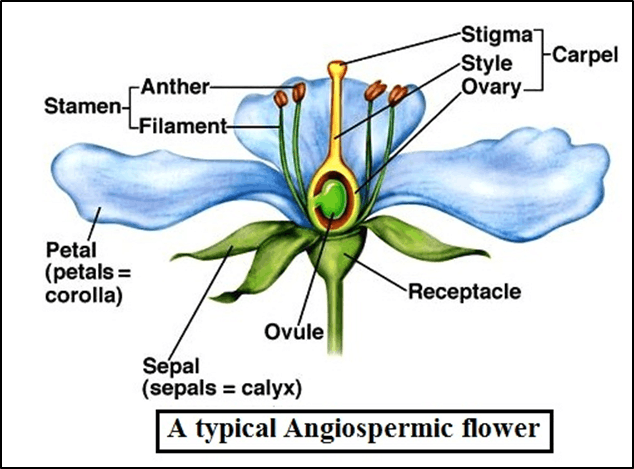 The diagram shows a flowering plant